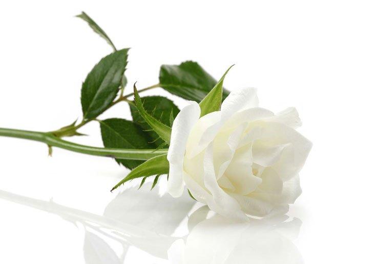 Souscrire un contrat de prévoyance obsèques - Une sage précaution