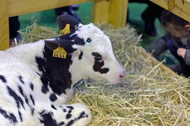 Salon international de l'agriculture - Venez visiter la plus grande ferme du monde