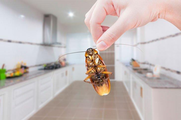 Location et loi ELAN - Faites la chasse aux insectes et autres parasites