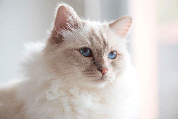 Choupette, la chatte de Karl Lagerfeld, peut-elle hériter ?