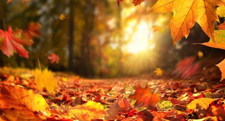 C'est de saison : que faire des feuilles mortes ?