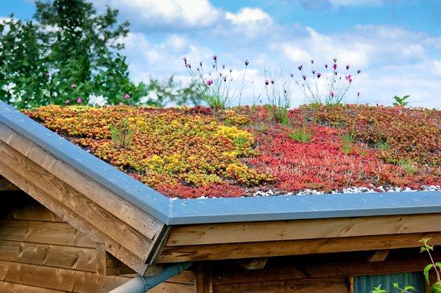 50 nuances de vert sur les toits urbains