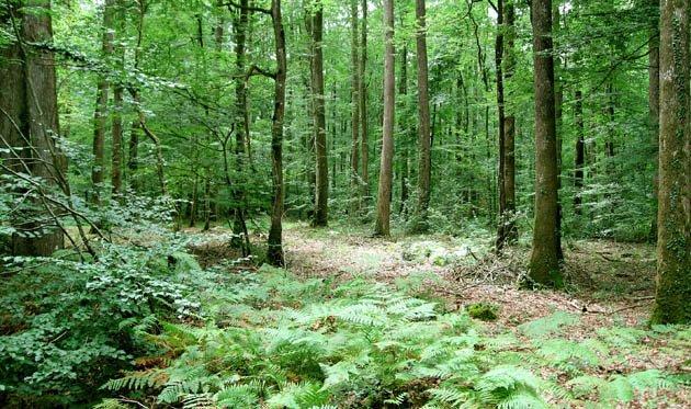 Bois et forêts : un placement... à l'abri des soucis