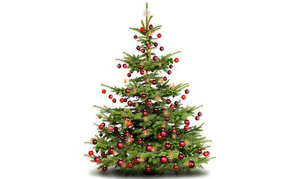 Le sapin : roi des forêts et de Noël