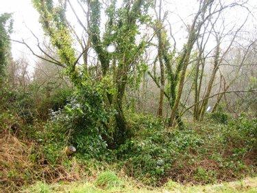 Achat Terrain De Loisirs Bois Etang Morbihan 56 Vente